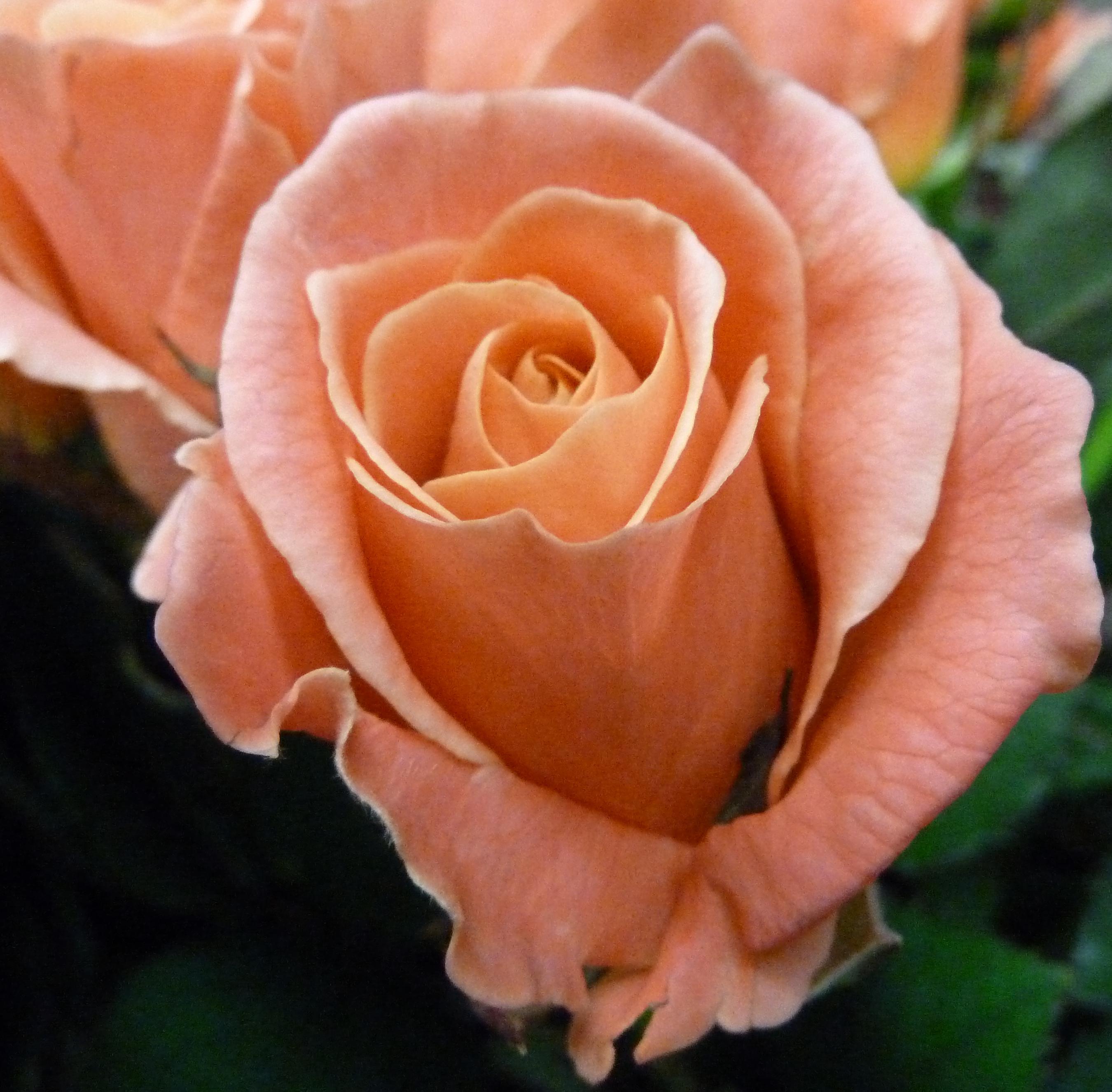 Livraisons de fleurs 7 7 jours - Marché Floral 90ef33e2810